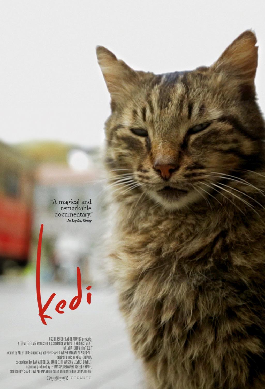 NARO CINEMA: A Natural History of Cats