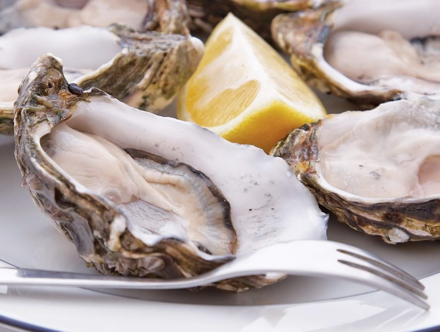 Consider The Oyster Tour