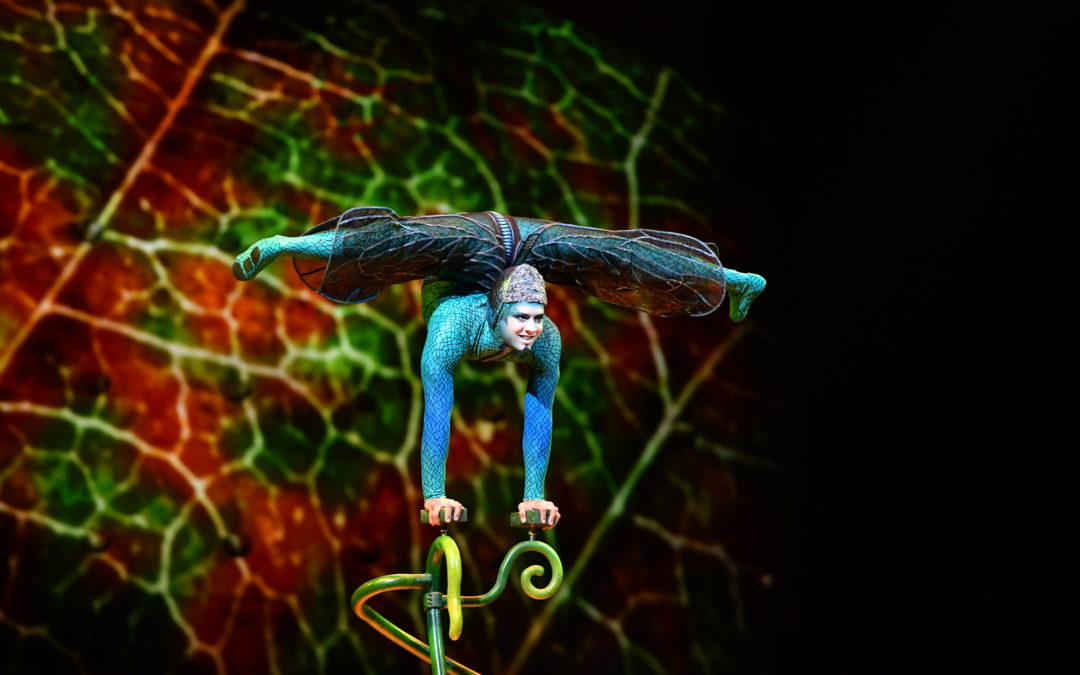 Cirque Launches OVO from Norfolk